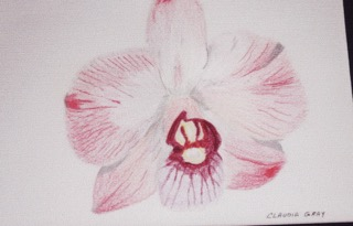 Orchid Prismacolor Pencil